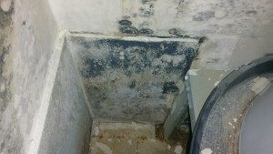Mold Remediation in Maryland