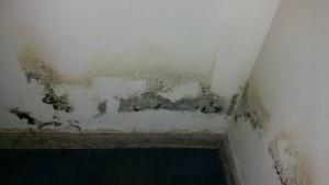Mold Remediation and Inspection in Anne Arundel County, MD