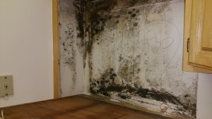 Mold Cleanup in Anne Arundel County, MD