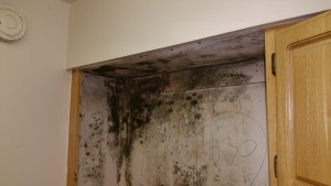 Mold Remediation in Anne Arundel County, Maryland